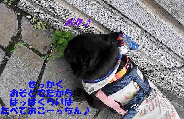 DSC_0240_20150622093449e9b.jpg
