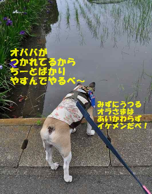DSC_0247_20150622145339140.jpg
