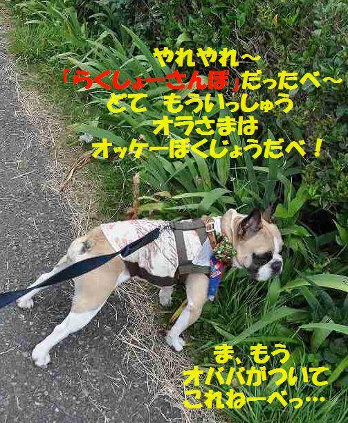 DSC_0261_20150623141105c24.jpg