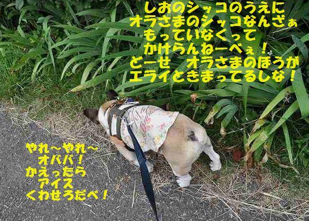 DSC_0262_20150623091600494.jpg