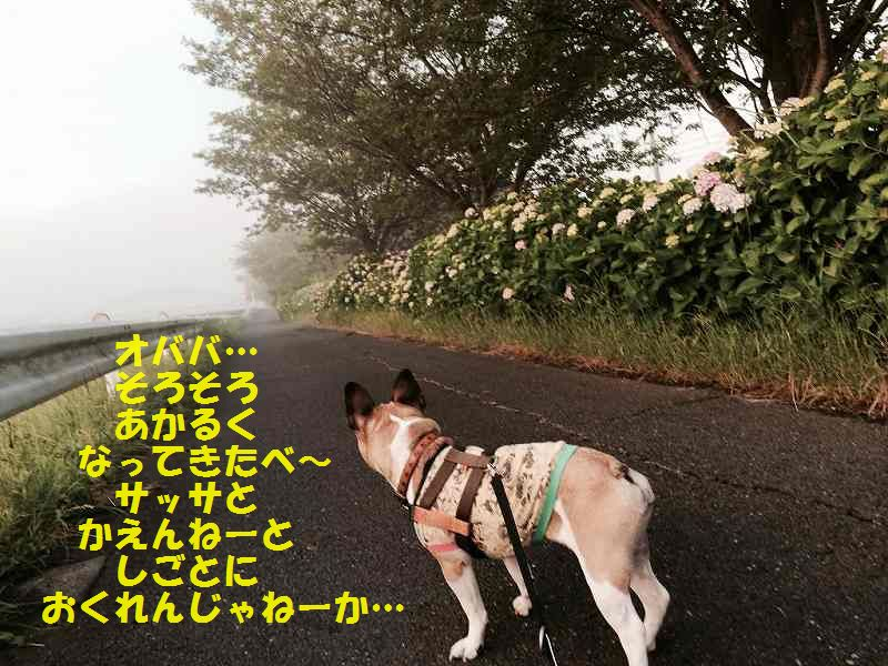 IMG_0409_20150610143607b76.jpg