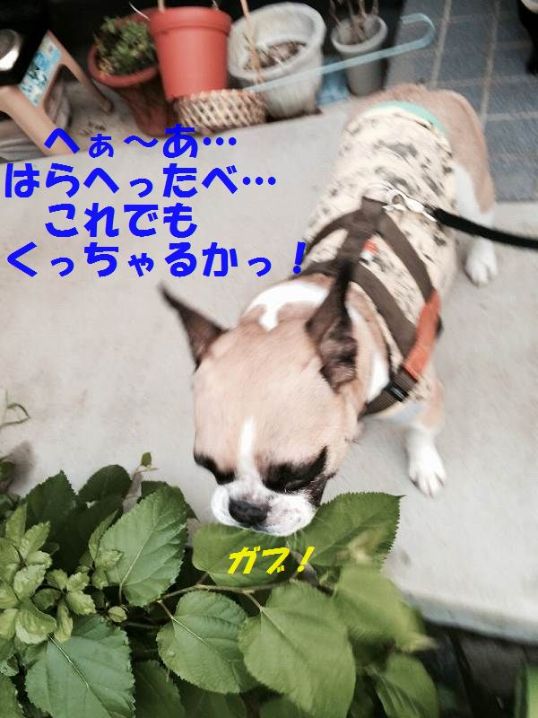IMG_0527_20150610143609f6f.jpg