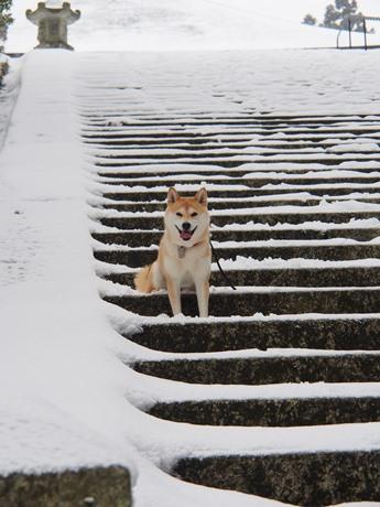 雪の階段にて~