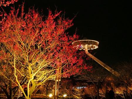 梅とアイランド富士