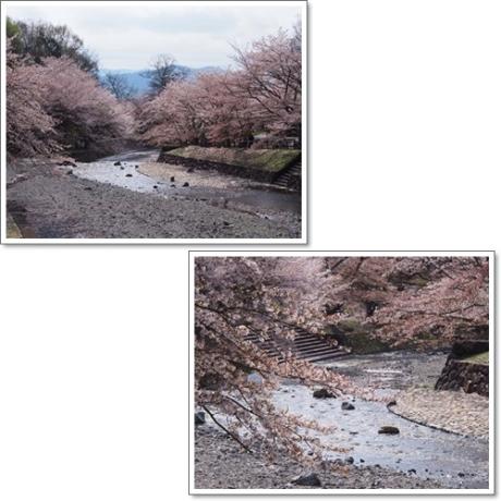 ピンクの川