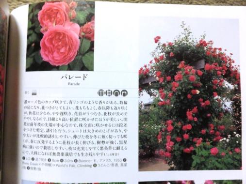 DSCF9180+1.jpg