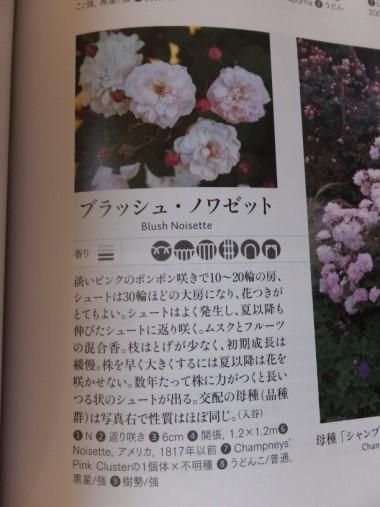 DSCF9591+1.jpg