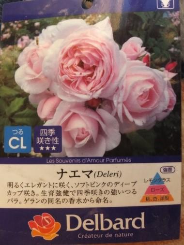 DSCF9781+1.jpg