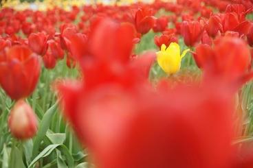 赤色の中の黄色