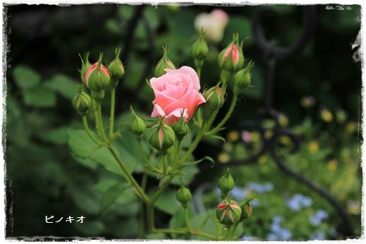IMG_587011.jpg