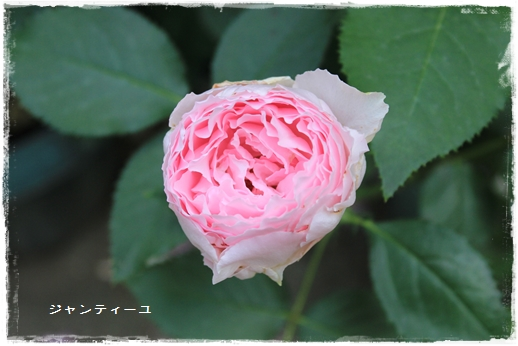 IMG_609511.jpg