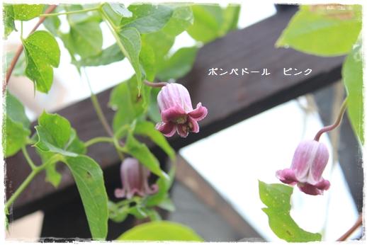 IMG_636811.jpg