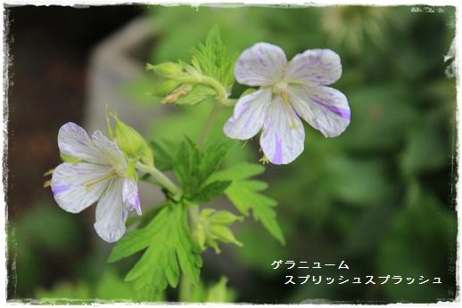 IMG_638711.jpg