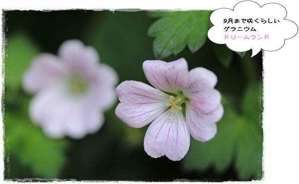 IMG_666411.jpg