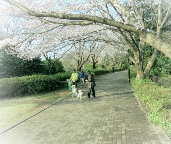 おさんぽ5_convert_20150331091743