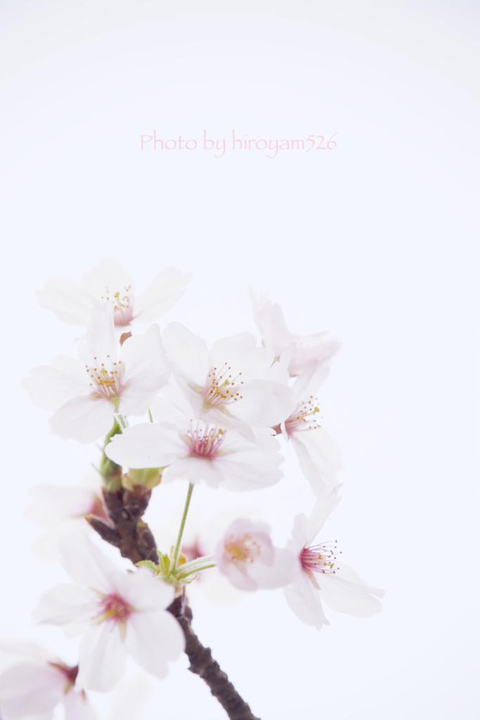 hiroyam526DSC_3037.jpg