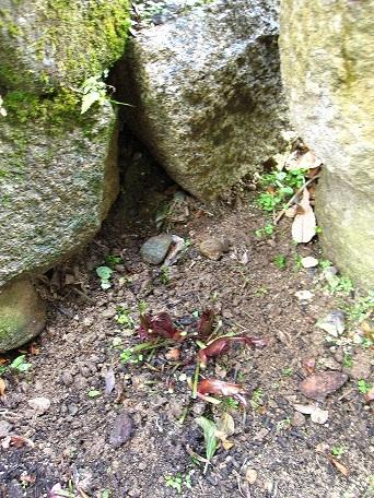 石臼横のクリロー1