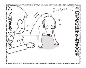 羊の国のラブラドール絵日記シニア!!「ペースメーカー」2