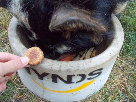 羊の国のラブラドール絵日記シニア!!「犬用?クッキー」4