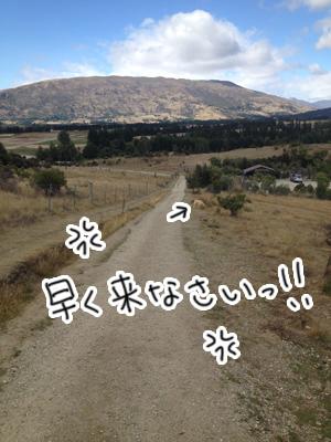 羊の国のラブラドール絵日記シニア!!「3歩進んで2歩さがるエビス」3