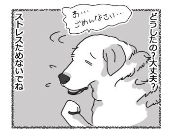 羊の国のラブラドール絵日記シニア!!「クロエちゃんのストレス」2