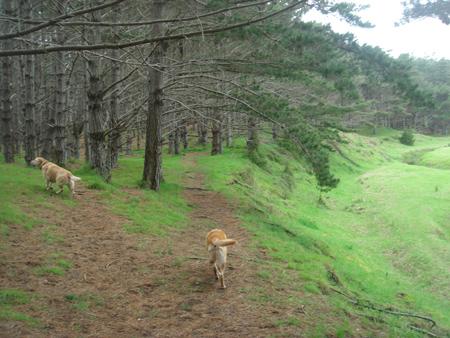 羊の国のラブラドール絵日記シニア!!「会いたくて」写真1