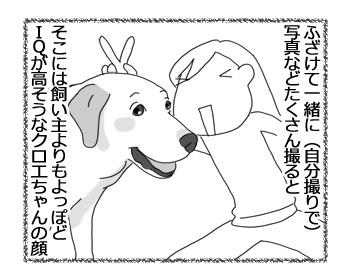 羊の国のラブラドール絵日記シニア!!「シニアの顔」2