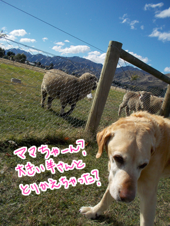 羊の国のラブラドール絵日記シニア!!「小人さん」2