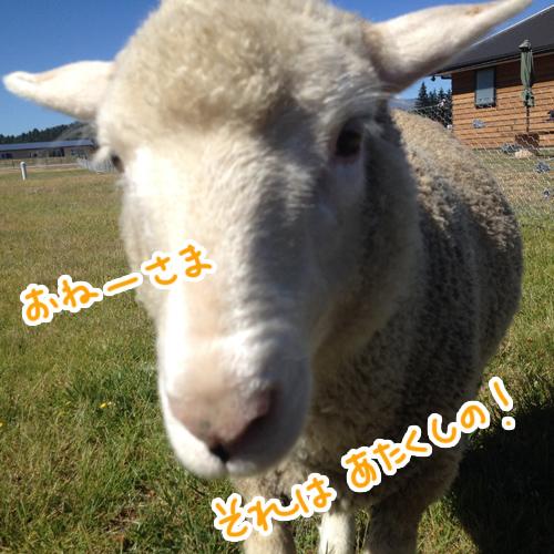 羊の国のラブラドール絵日記シニア!!「おもいこみ」写真1