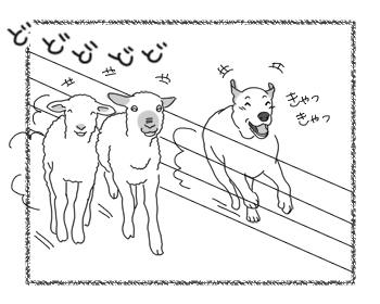 羊の国のラブラドール絵日記市にあ!!「シープドッグ奮闘記」3