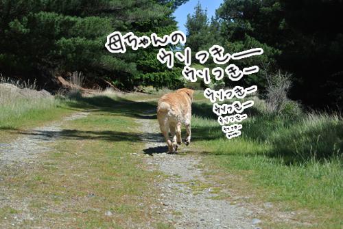 羊の国のラブラドール絵日記シニア!!「グレてやるのだ」写真1