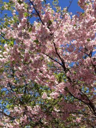 ヘルシンキの春1