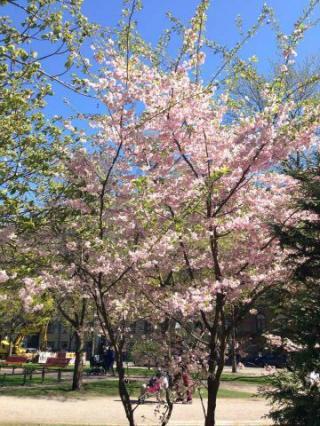 ヘルシンキの春2