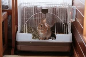 rabbit02 (1)