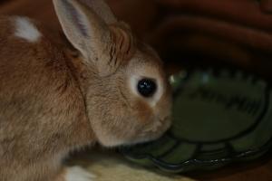 rabbit02 (3)