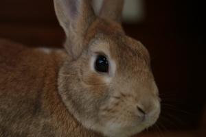 rabbit02 (4)
