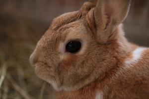 rabbit02 (2)