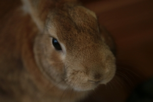 rabbit02 (5)
