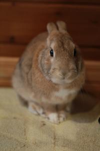 rabbit02 (6)