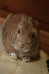 rabbit02 (7)