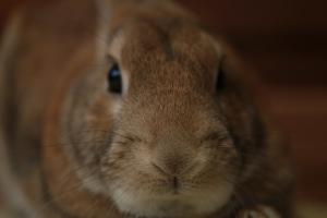 rabbit02 (8)
