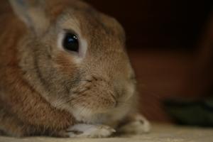 rabbit02 (9)