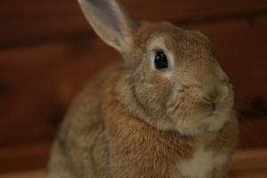 rabbit02 (10)