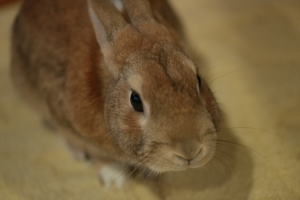 rabbit02 (12)