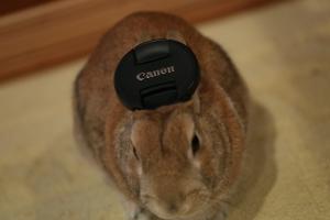 rabbit02 (11)