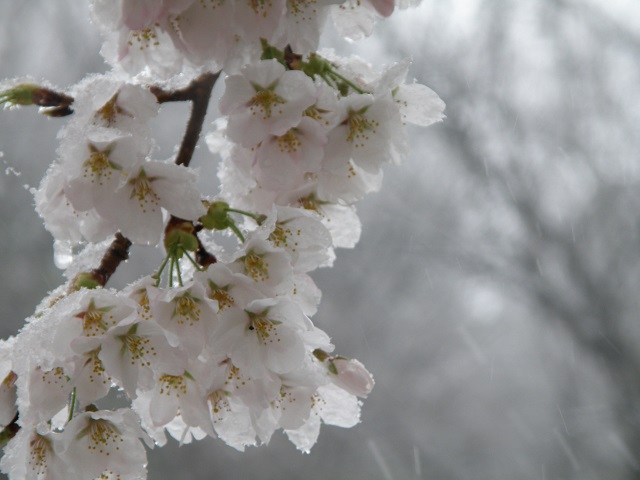 yuki4813.jpg