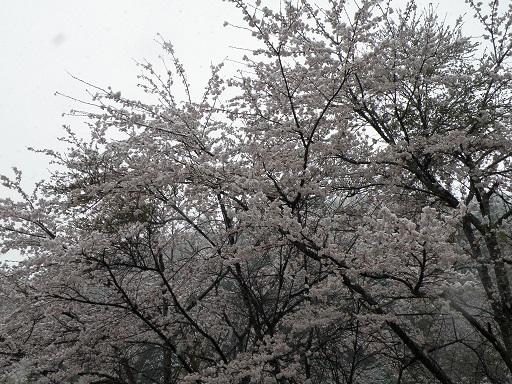 yuki486.jpg