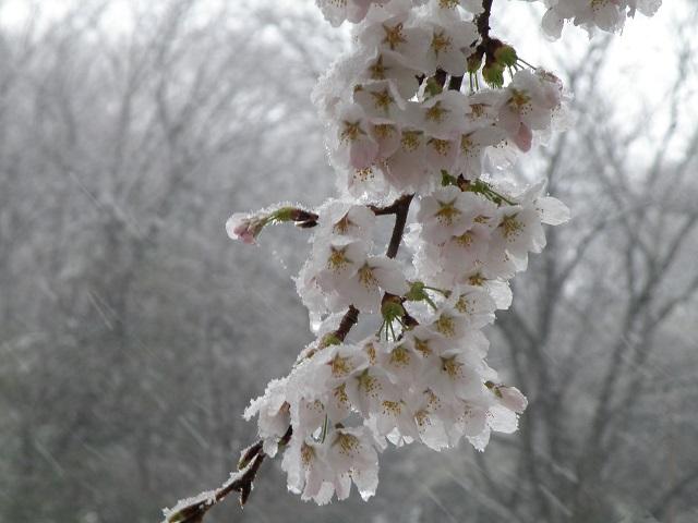 yuki489.jpg