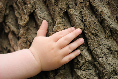 child_baby_hand_tree_bark.jpg