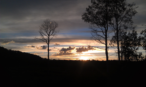 sunset_trees_silhouette.jpg